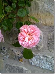 Generous Gardener (2)