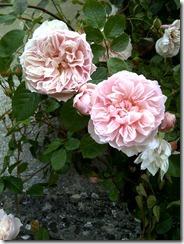 Generous Gardener (3)