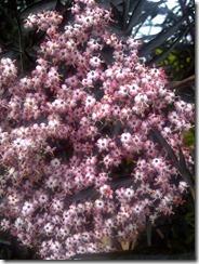 South Kesteven-20120615-00809