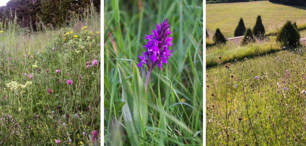 Rare Orchid Blog Triptic Easton Walled Gardens