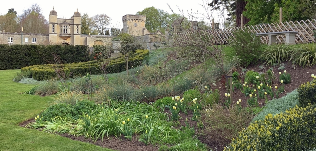 IMG_0961 white space garden tulip diana at Easton Walled Gardens