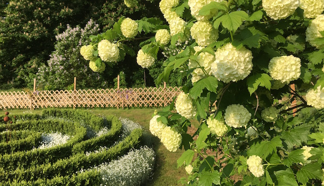IMG_1233 viburnum and white space garden 640