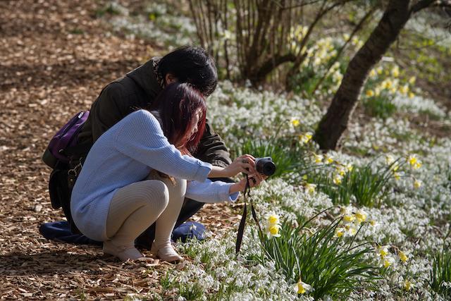 EWG 18.2.16-6 (1) snowdrop visit to Easton Walled Gardens