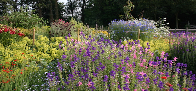 Blue Clary Sage is great with sweet peas and cornflowers