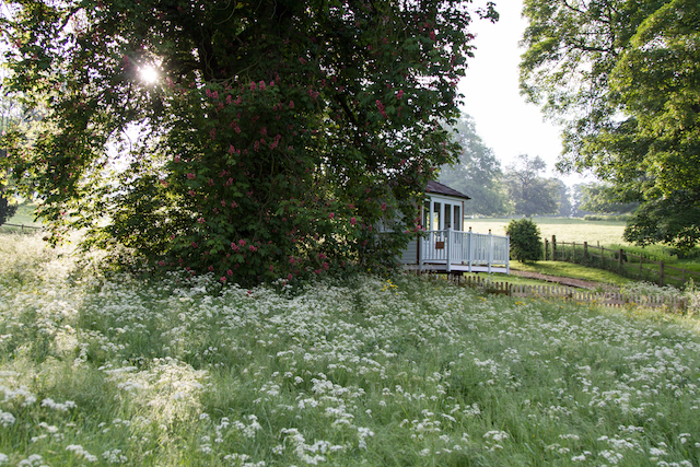 June in the Cedar Meadow at Easton Walled Gardens